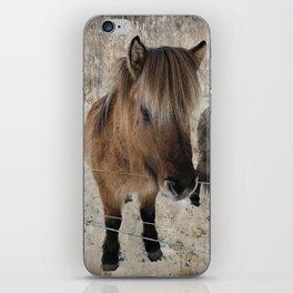 snowy Icelandic horse iPhone Skin