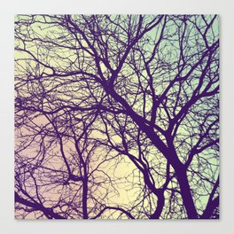A Network of Tree Branches Canvas Print