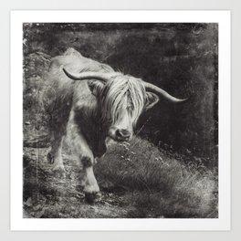 Scottish Highland Cow - Highlander Art Print