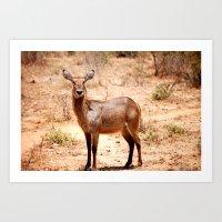 tame impala Art Prints featuring Impala by lularound