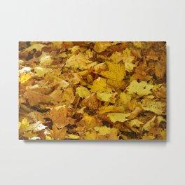 Season Autumn Golden Leaves Metal Print