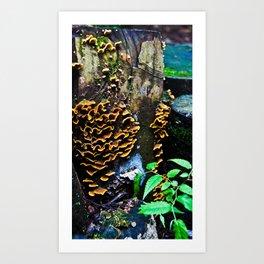 Tree Stump Mushroom Print Art Print
