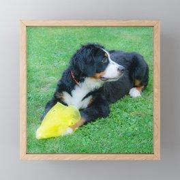 Bernese Mountain Dog Framed Mini Art Print