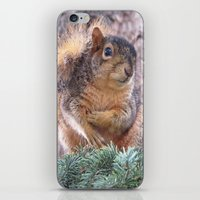 squirrel iPhone & iPod Skins featuring Squirrel by Sarahpëa