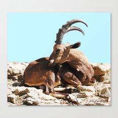 Nubian Ibex 3 Canvas Print