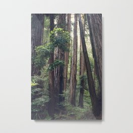 The Redwoods at Muir Woods Metal Print