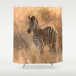 Zebra foal in morning light Shower Curtain