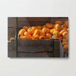 Small Pumpkins in Wood Crate Metal Print