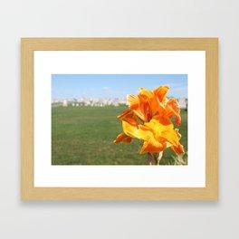 Cemetery Flower Framed Art Print