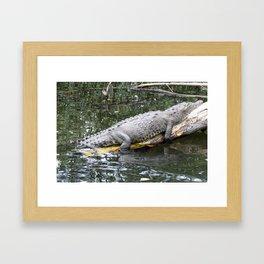 Saltwater Crocodile Framed Art Print