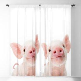 Baby Piglet Portrait Blackout Curtain