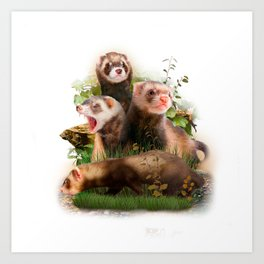 Four Ferrets in Their Wild Habitat Art Print