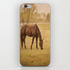 Horse Photograph. Wisconsin Landscape and Nature. Horse Grazing.   iPhone & iPod Skin