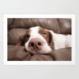 Funny Dog Photography Brittany Spaniel Close Up  Art Print