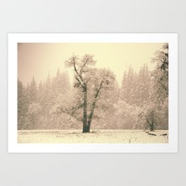 Yosemite Lonely Tree Art Print