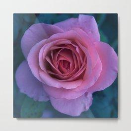 bed of roses: lilac Metal Print
