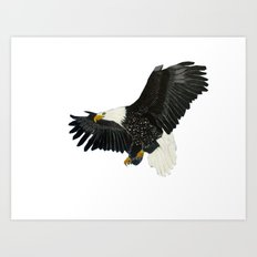 Bald Eagle-4 Art Print
