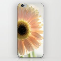 Salmon Gerbera iPhone & iPod Skin