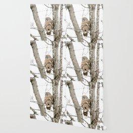 Barred Owl Side-Eye Wallpaper