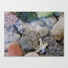 Corals of the Andaman Sea Canvas Print