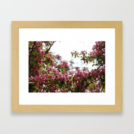 Pink Blossoms #01 Framed Art Print