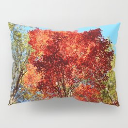 Red Maple in October Pillow Sham