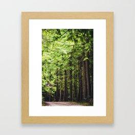 cedars Framed Art Print