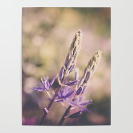 Purple Lupine Poster