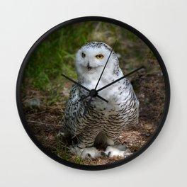 Alaskan Snowy Owl - Summer Wall Clock