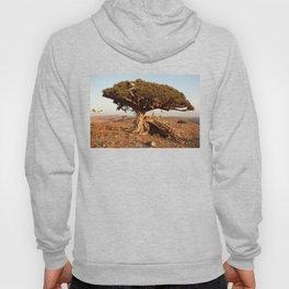 Socotra — dreams of the Lost Paradise Hoody