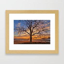 Winter Cottonwood Framed Art Print