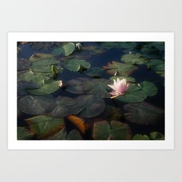 No Mud, No Lotus Art Print