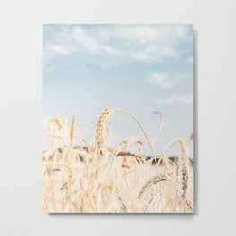 Straw Field Detail I Art Print Nature Photography Metal Print