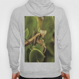 Praying Mantis On Green Garden Background Hoody