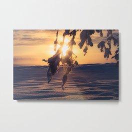 Winter Morning sunrise on leaves at Creamers Field, Fairbanks Alaska Metal Print