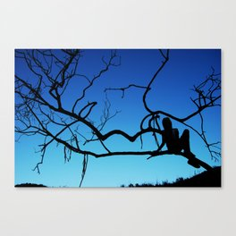 Caught in a Tree Canvas Print