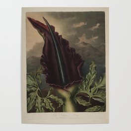 The Dragon Arum Temple of Flora Poster