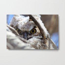 Owlet Metal Print