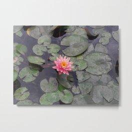 Perfect Water Lily - Lumbini, Nepal Metal Print