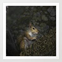 squirrel Art Prints featuring Squirrel by Judith Lee Folde Photography & Art