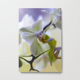 Orchid Debbie Metal Print