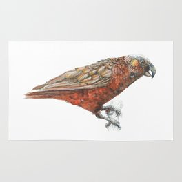 New Zealand parrot, the Kaka Rug