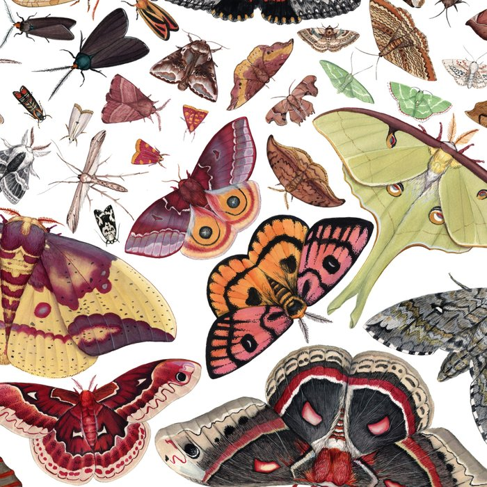 Moths of North America Pattern Leggings