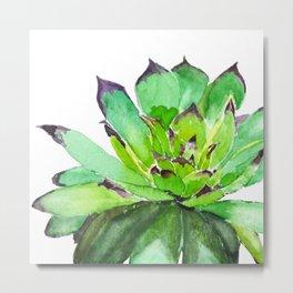 green succulent 2 Metal Print
