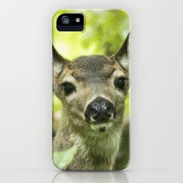 Portrait of a Young Deer iPhone Case
