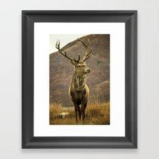 Red Deer Stag in Autumn Framed Art Print
