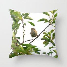 Wren Songbird Bird on a Branch (Troglodytes) Throw Pillow