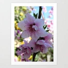 Pastel Shades of Peach Tree Blossom Art Print