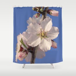 Almond blossom branch Shower Curtain
