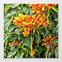Spectacular orange trumpet flower Canvas Print